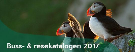 Banner_katalog_17